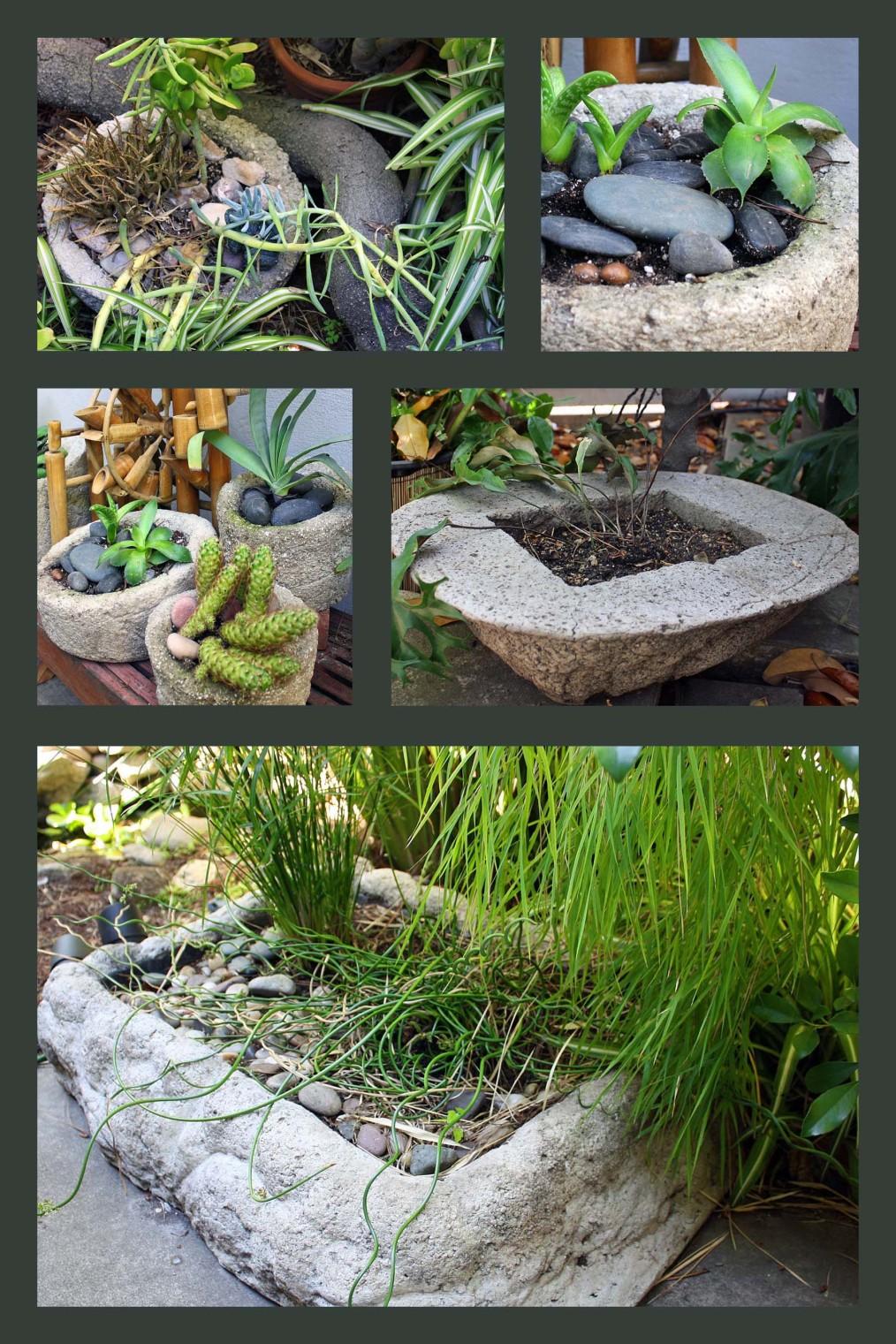 Making Hypertufa Pots Jesse Garden
