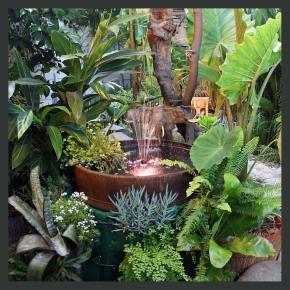 tropical plants water garden