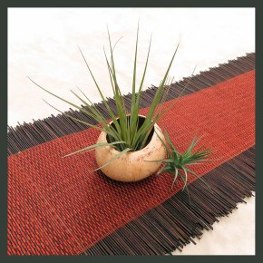 7 ways to display air plants tillandsia