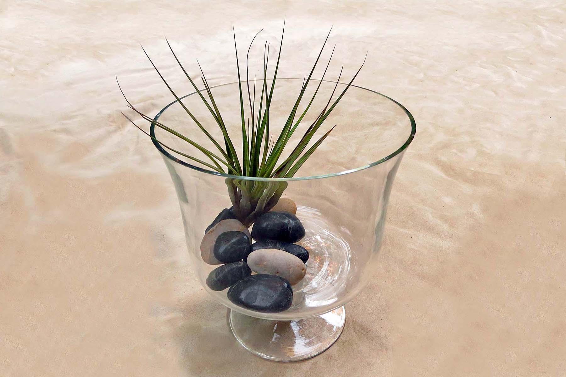 7 Ways to Display Air Plants | jesse garden